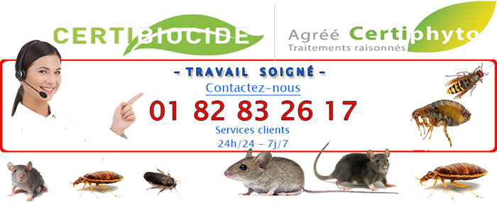 Insectes Torcy